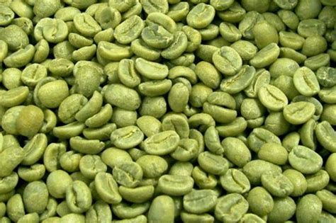 Coffe Green the green coffee bean the new burning superfood