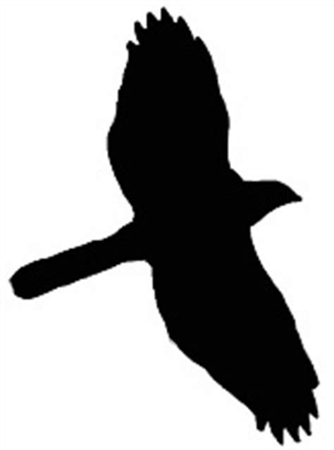 swedenwise birdsavers