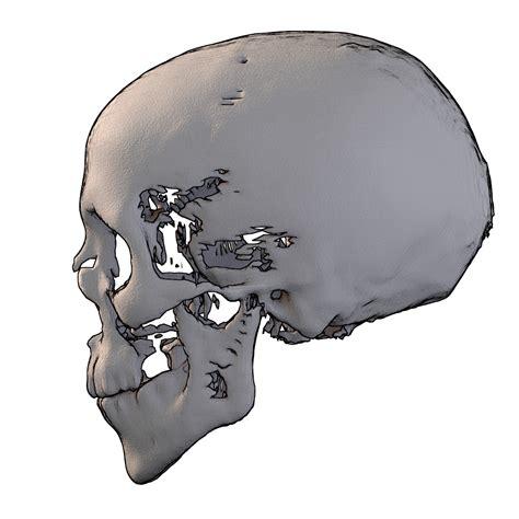 inkscape tutorial iniciantes tutorial reconstru 231 227 o facial forense 2d para iniciantes