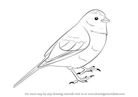 yellowhammer coloring page step by step how to draw a yellowhammer