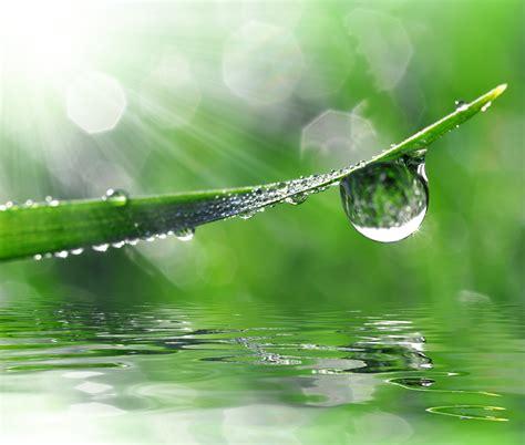 fotolia imagenes zen goutte d eau sur un brin d herbe photo 169 vencav fotolia