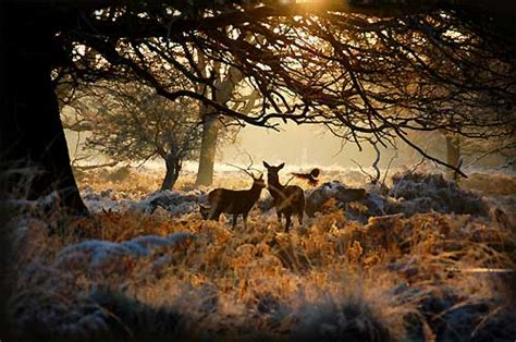 boat covers red deer richmond park deer amazing photos