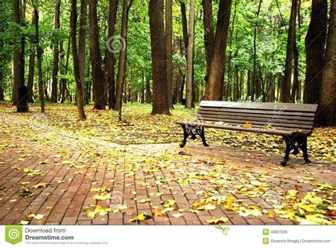 bos bank een lege bank in een bos stock foto afbeelding 43607026