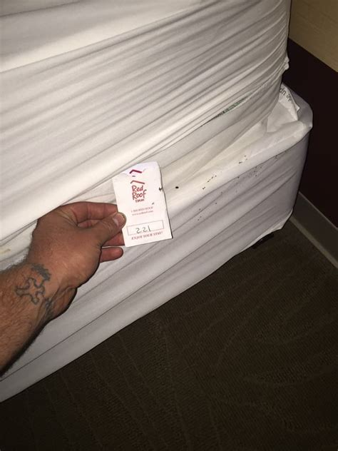 hotel bed bug report london ky bed bug hotel and apartment reports