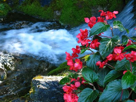 beautiful waterfalls with flowers quot waterfalls and flowers quot by 5hikers redbubble