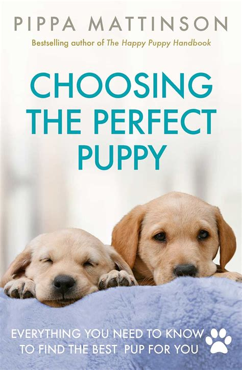 what to buy for a new puppy what to look for when buying a puppy the happy puppy site