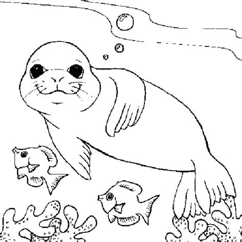 seals coloring pages