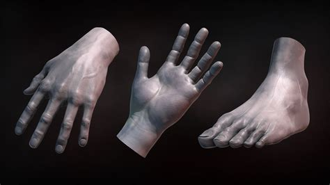 zbrush tutorial human body zbrush tutorial sculpting human hands and feet youtube