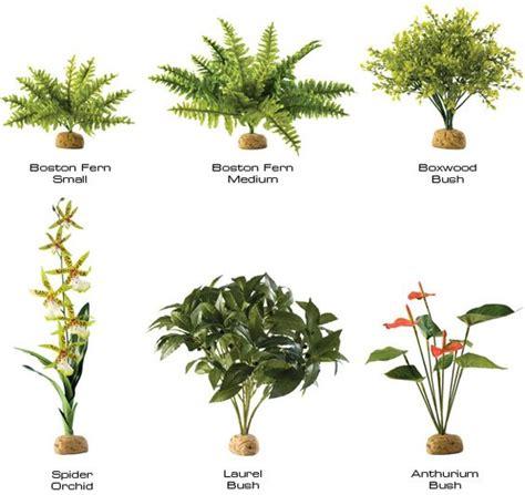 tropical rainforest plants list tropical rainforest - List Of Tropical Plants