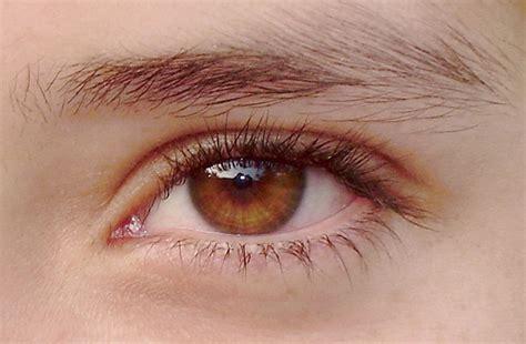 honey eye color honey colored eye color de miel flickr photo