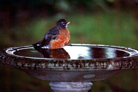 how to clean algae off a birdbath bird baths birds and