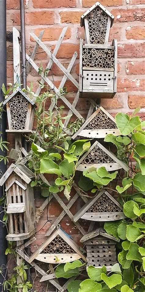 Arbor Backyard Beekeepers by Best 25 Trellis Fence Ideas Only On Privacy