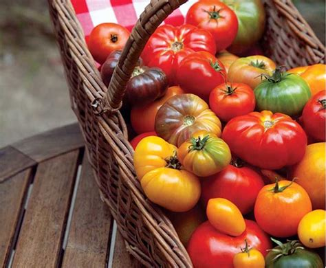best tomato varieties to grow the best tomatoes to grow where you live organic