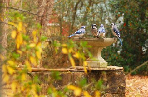 attracting birds to your backyard talentneeds