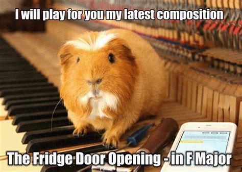 Guinea Pig Meme - guinea pigs pigs and memes on pinterest
