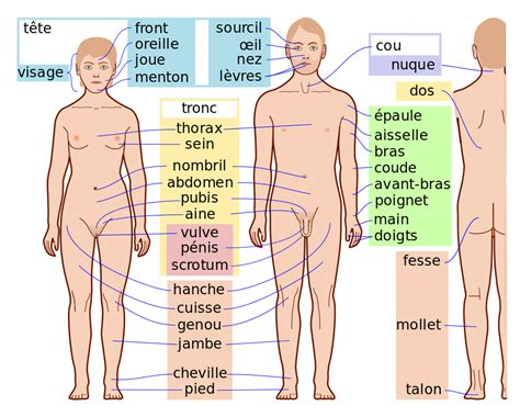 the body in the file human body features fr svg wikimedia commons