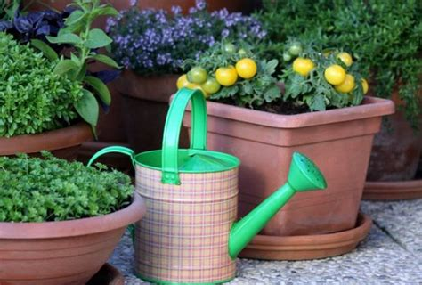container garden vegetables growing vegetables in pots starting a container