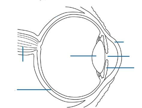 blank eye diagram blank eye diagram animal poaching research