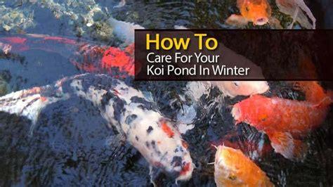 care   koi pond  winter video