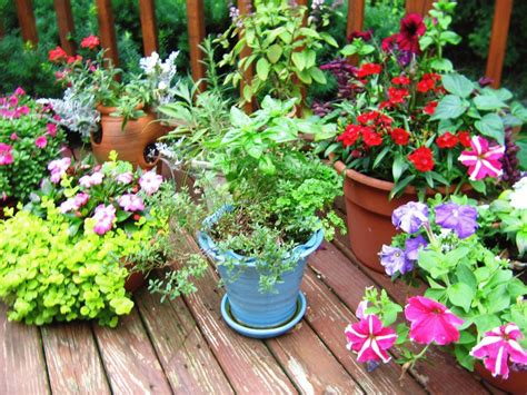 fragrant container plants the mysterious garden muse fragrant herbs for container