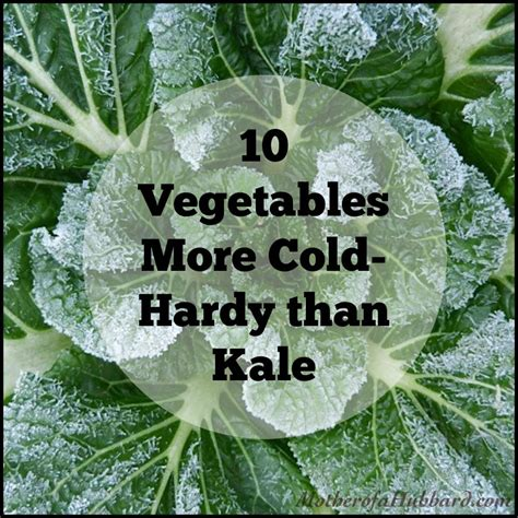 vegetables more cold hardy than kale best kale ideas