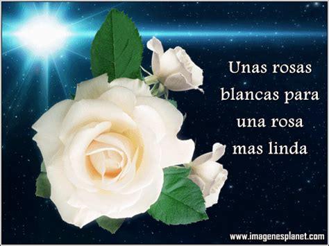 imagenes de rosas blancas con mensajes imagenes bonitas de rosa blanca con movimiento im 225 genes
