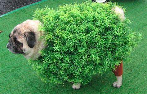 camo pug 18 pug dogs in costumes omfg