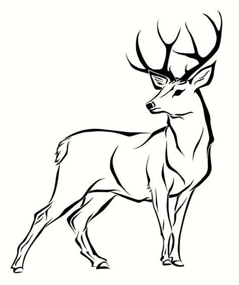 realistic deer coloring pages realistic deer pages coloring pages