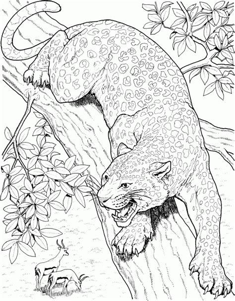 jaguar cat coloring page jaguar coloring pages coloring home