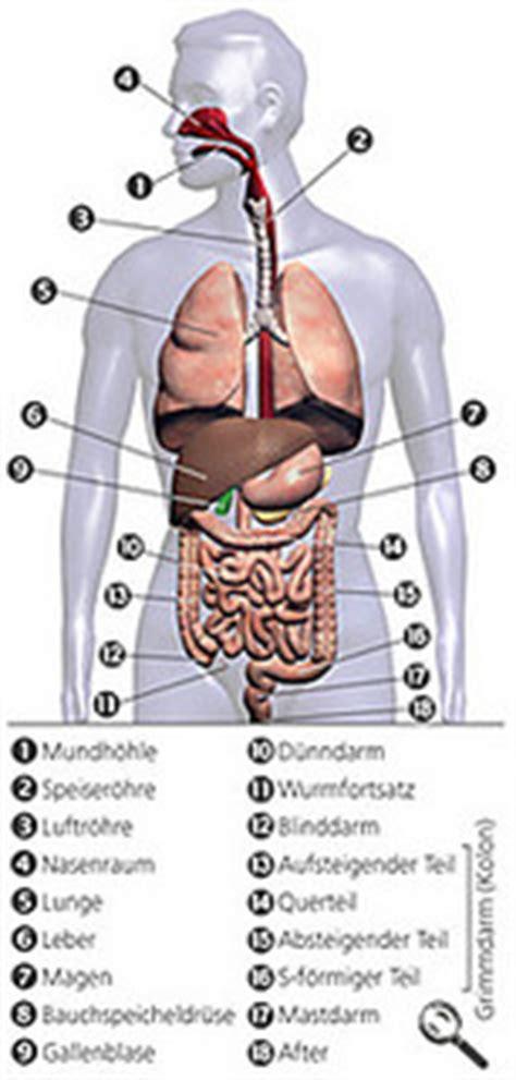 wo liegen welche inneren organe galle links oder rechts galle
