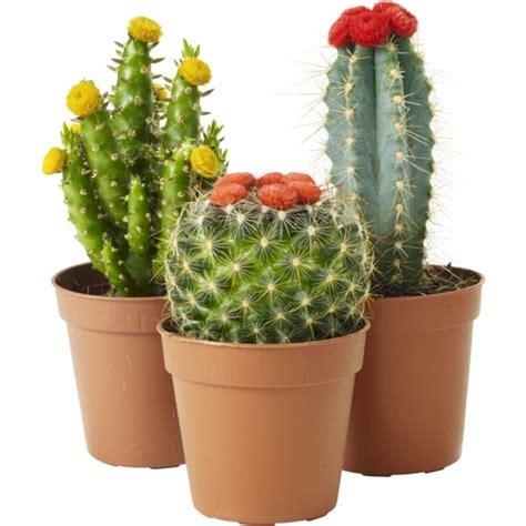 Cute Cactus Pots kaktus mix sorter m pynt makuhuone pinterest cactus