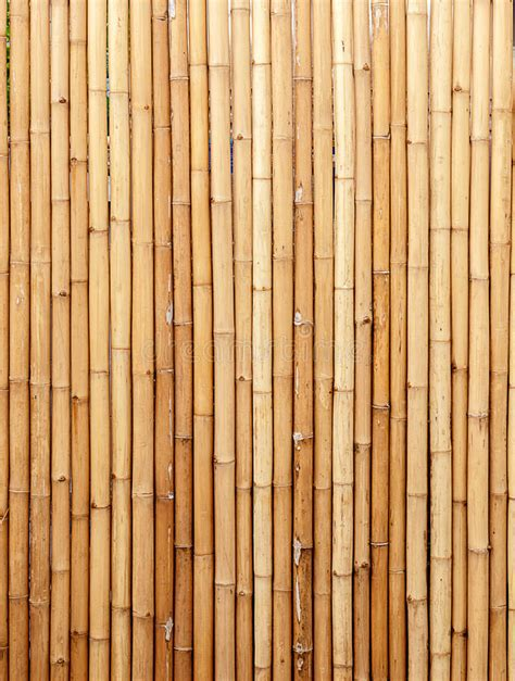 bamboo color brown bamboo background color stock photo image