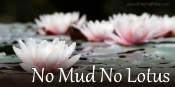 Lotus Flower Quotes Mud What Does No Mud No Lotus Mike Marko