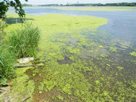 submerged aquatic plants and algae management for lakes