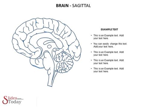 brain template 1000 images about brain based learning on