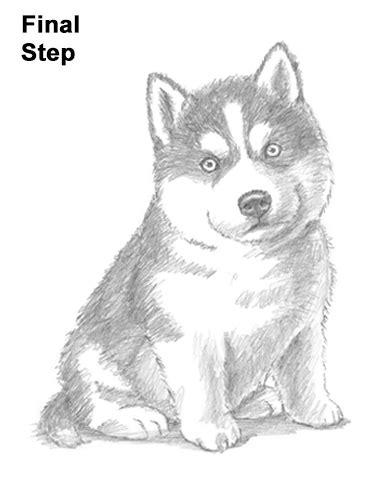 how to a husky husky drawing www pixshark images galleries with a bite