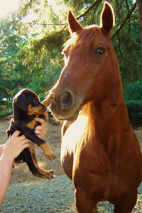 puppies and horses and baby puppies dogs cats horses kittens litle pups
