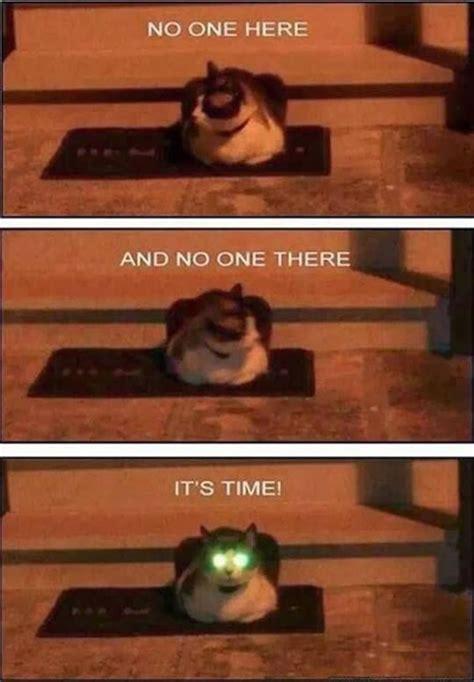 Laser Cat Meme - funny cats top 20 funniest cat pics cutest cats