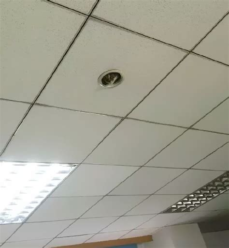 Cat Ceiling by Check Out This Adorable Cat Spying On Office