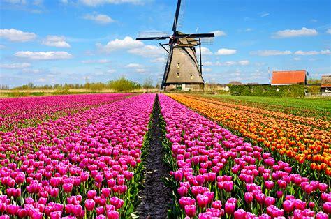 ci di fiori olanda olanda in fiore losaiche