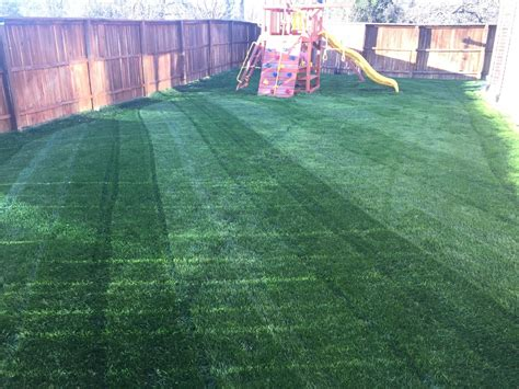 lawn grass seed top brands and varieties from scotts pennington