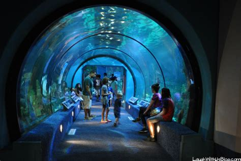 Moody Gardens Prices by Moody Gardens Aquarium And More Laugh With Us