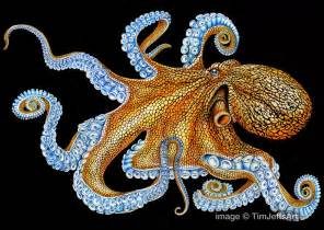 octopus colors tim jeffs