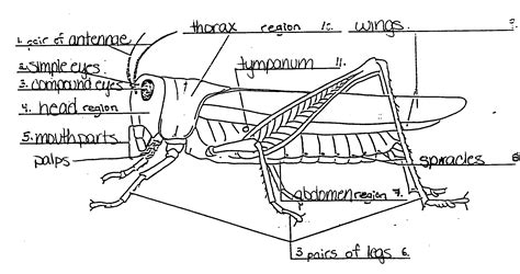 grasshopper diagram parts grasshopper