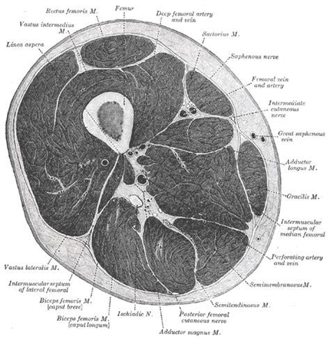 cross section of nerve vietnamese medic ultrasound case 162 intramuscular mass