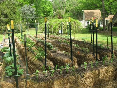 Hay Bale Garden by Straw Bale Garden One Gardener S Project Walter Reeves