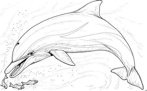 river dolphin coloring page delfin isst fische ausmalbild malvorlage tiere