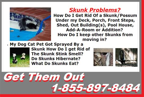 how do you get rid of skunks in your backyard mississauga pest control 1 855 897 8484