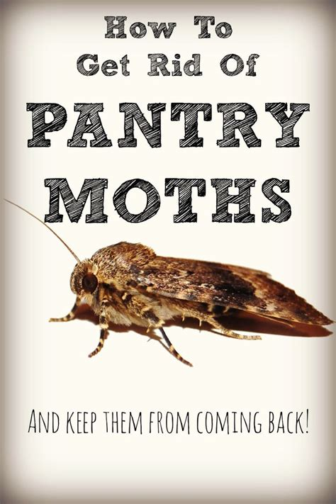 How To Get Rid Of Pantry Pests by 1000 Ideas About Pantry Moths On Moth