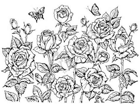 cluster of roses tattoo cluster drawing inspiration